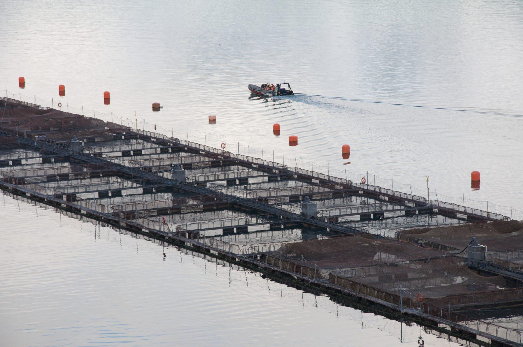 Salmon Farming 2
