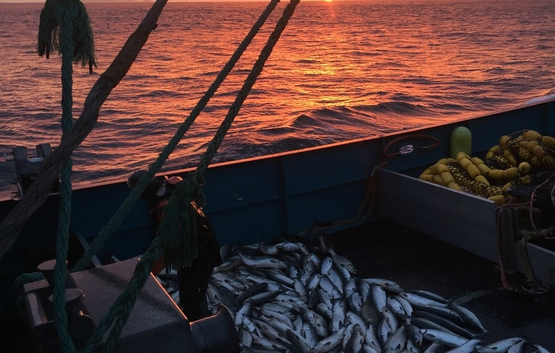 transboundary-mining-salmon.jpg