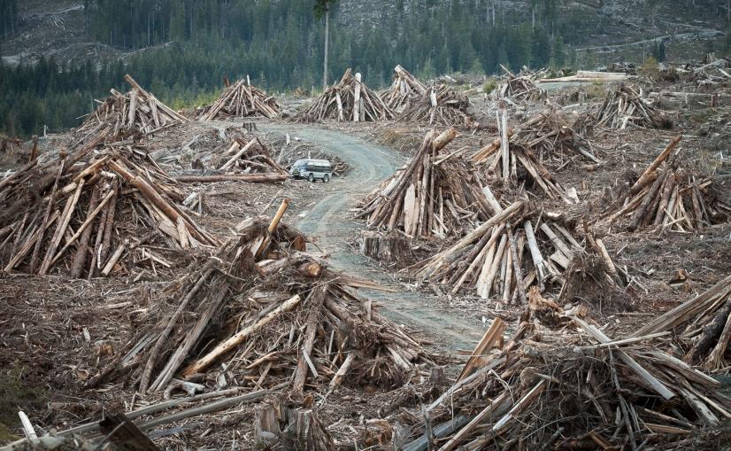wood-waste-logging-vancouver-island.jpg