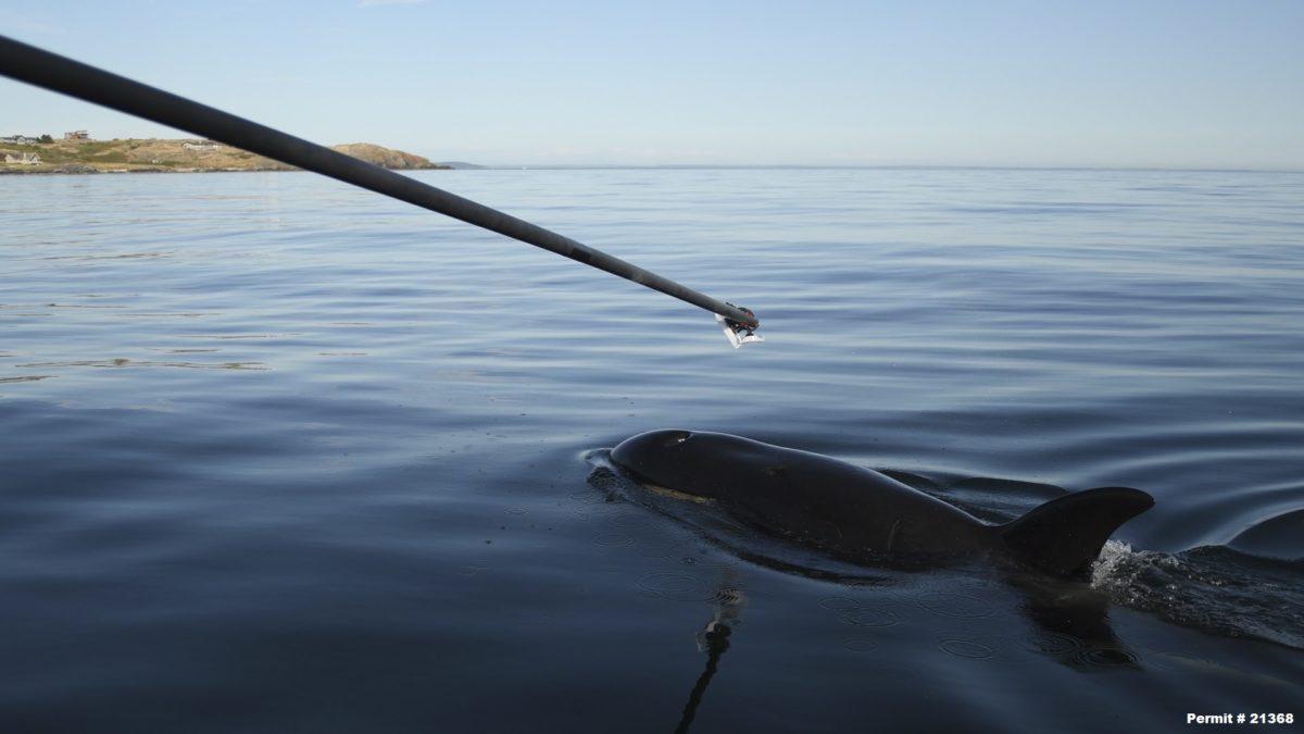 Whale breath sample