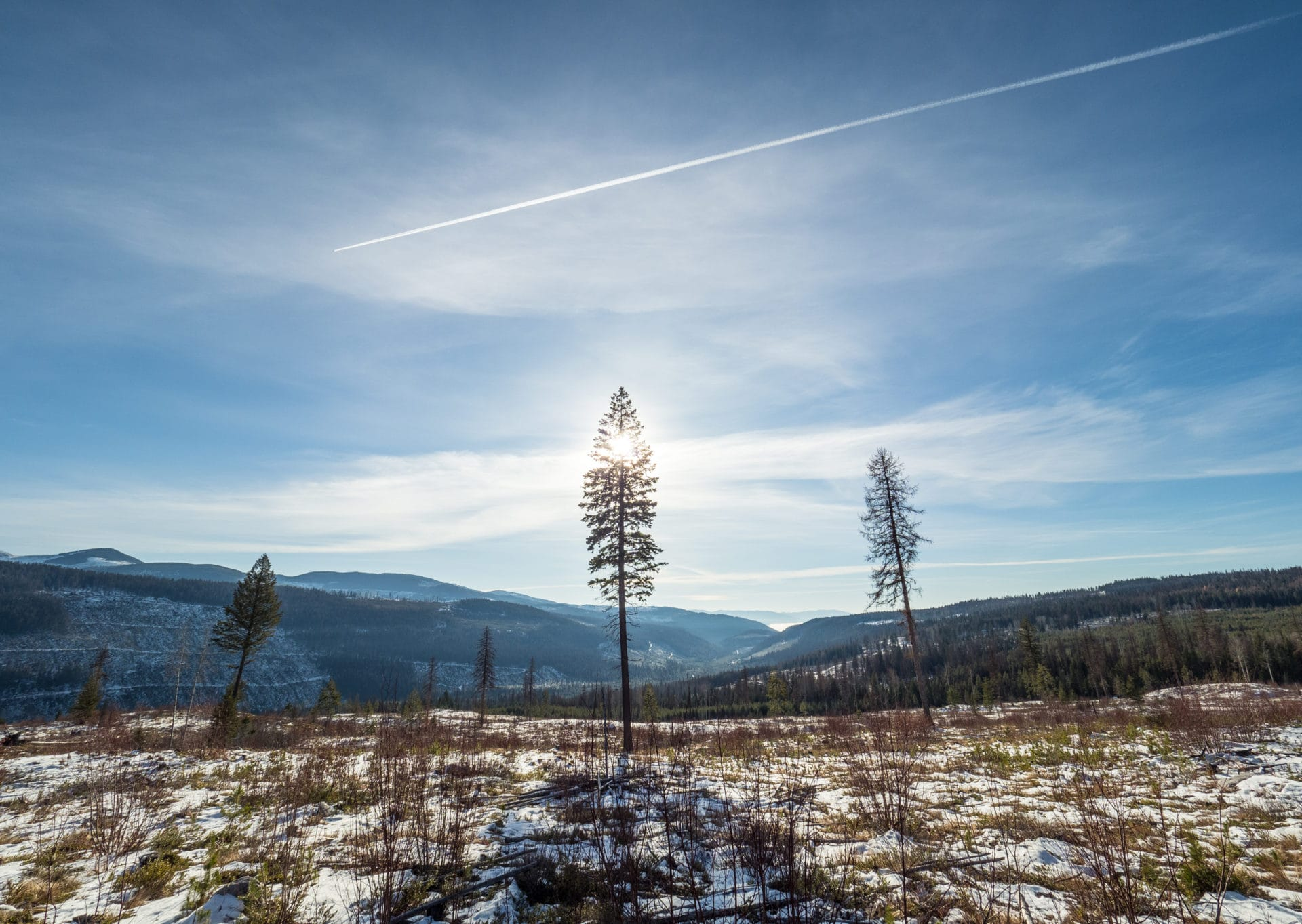 Grand Forks cutblock logging