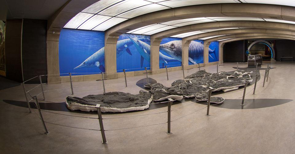 ichthyosaur, Shonisaurus sikanniensis