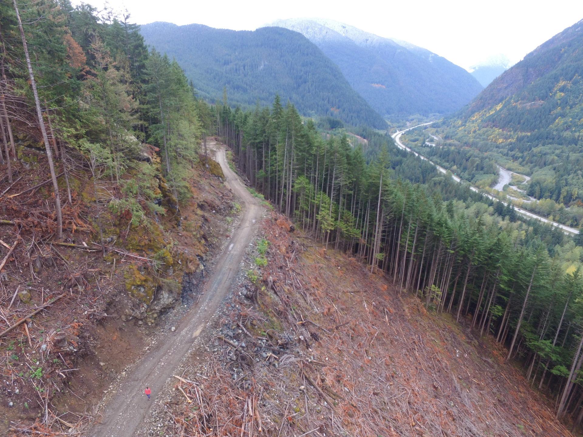 logging spotted owl habitat BC