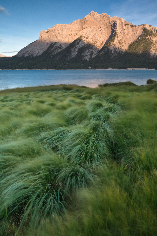 Mount Michener Abraham Lake Bighorn