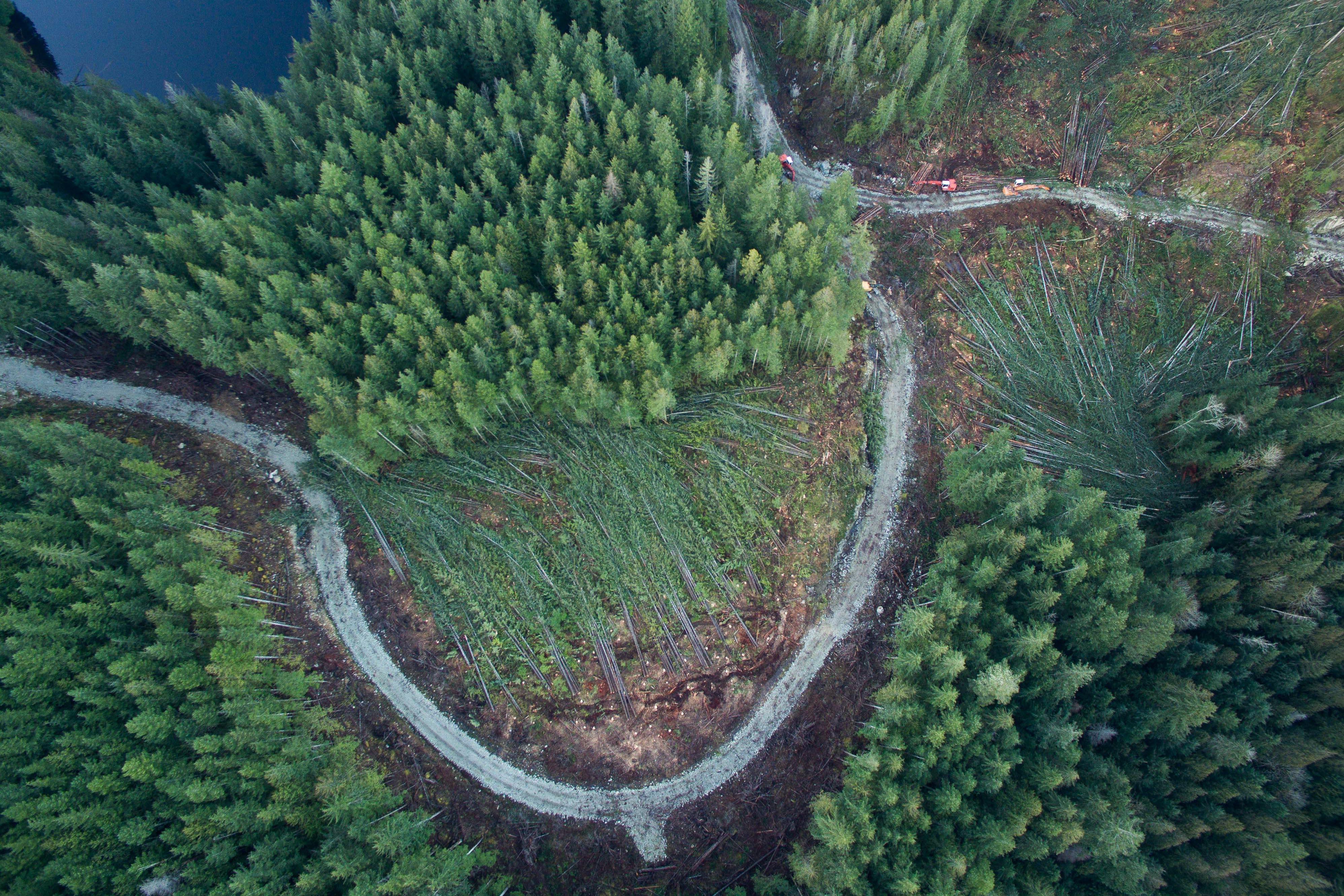Logging Phillips Arm TimberWest