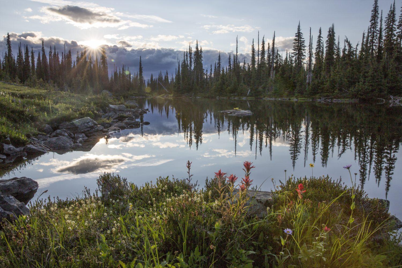 Selkirk Caribou habitat David Moskowitz