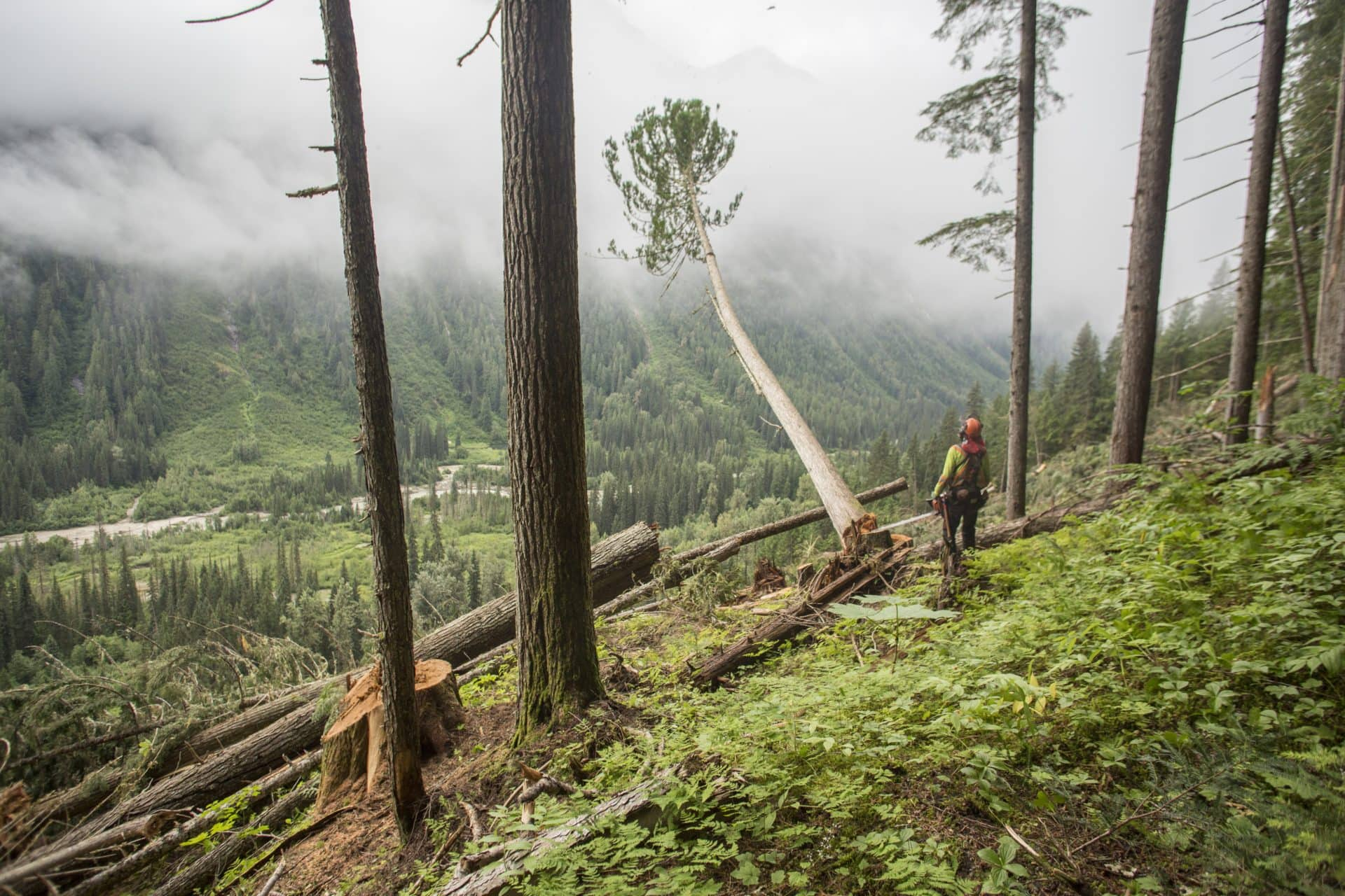 Old-growth logging in the Selkirk Mountains David Moskowitz