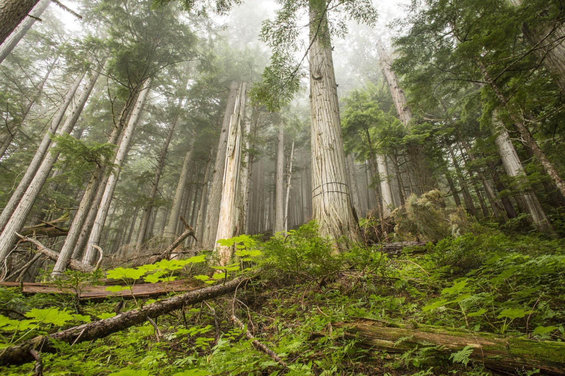 Selkirk forestry logging David Moskowitz
