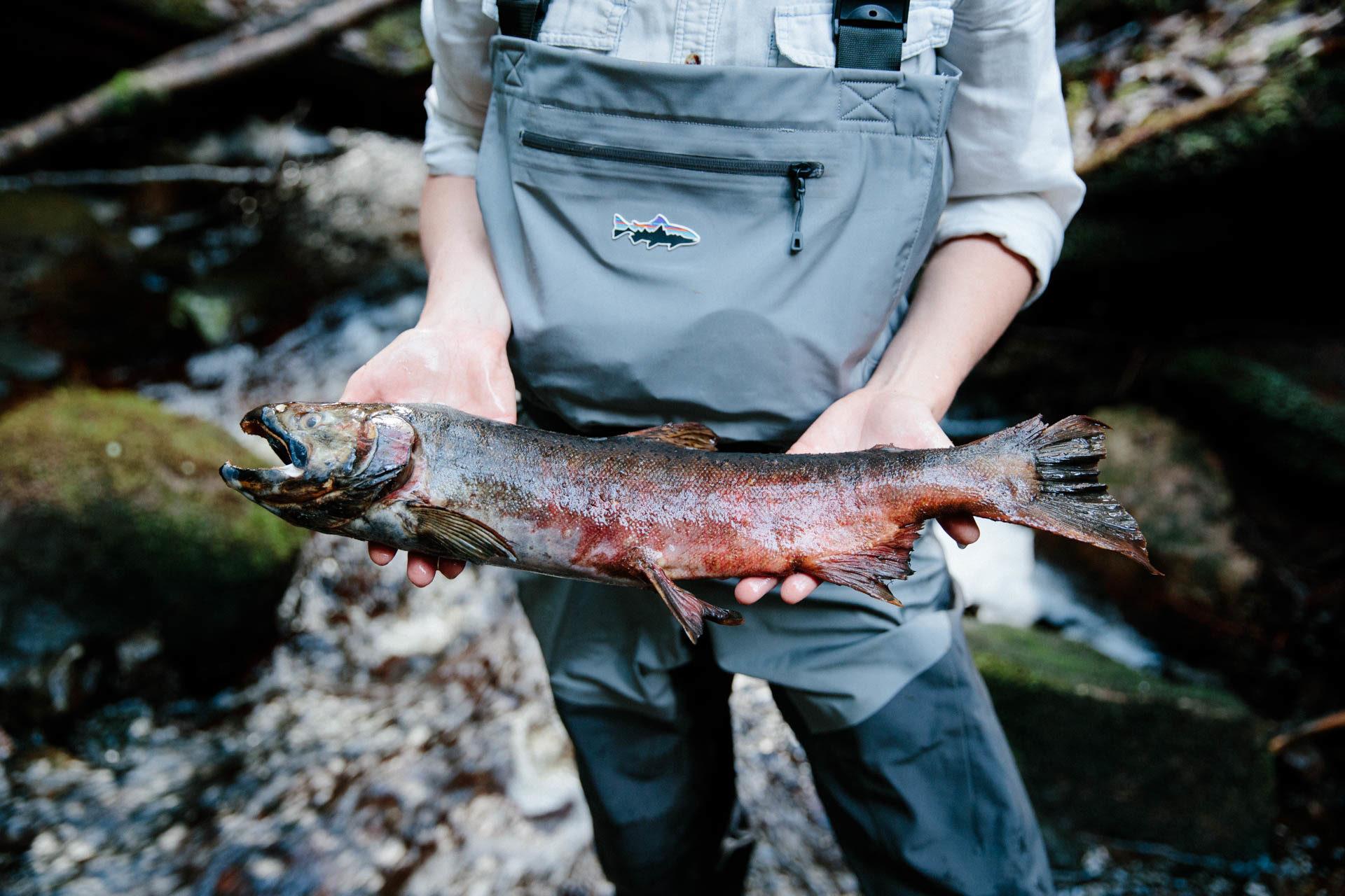 Jessica Hutchinson coho salmon