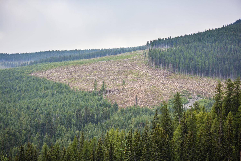 Clearcut logging private lands B.C.