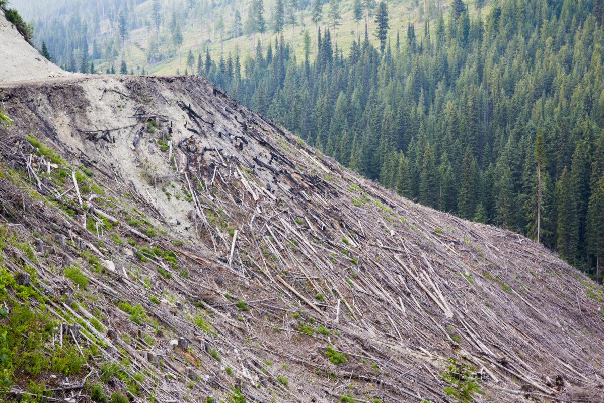 Logging private land B.C.
