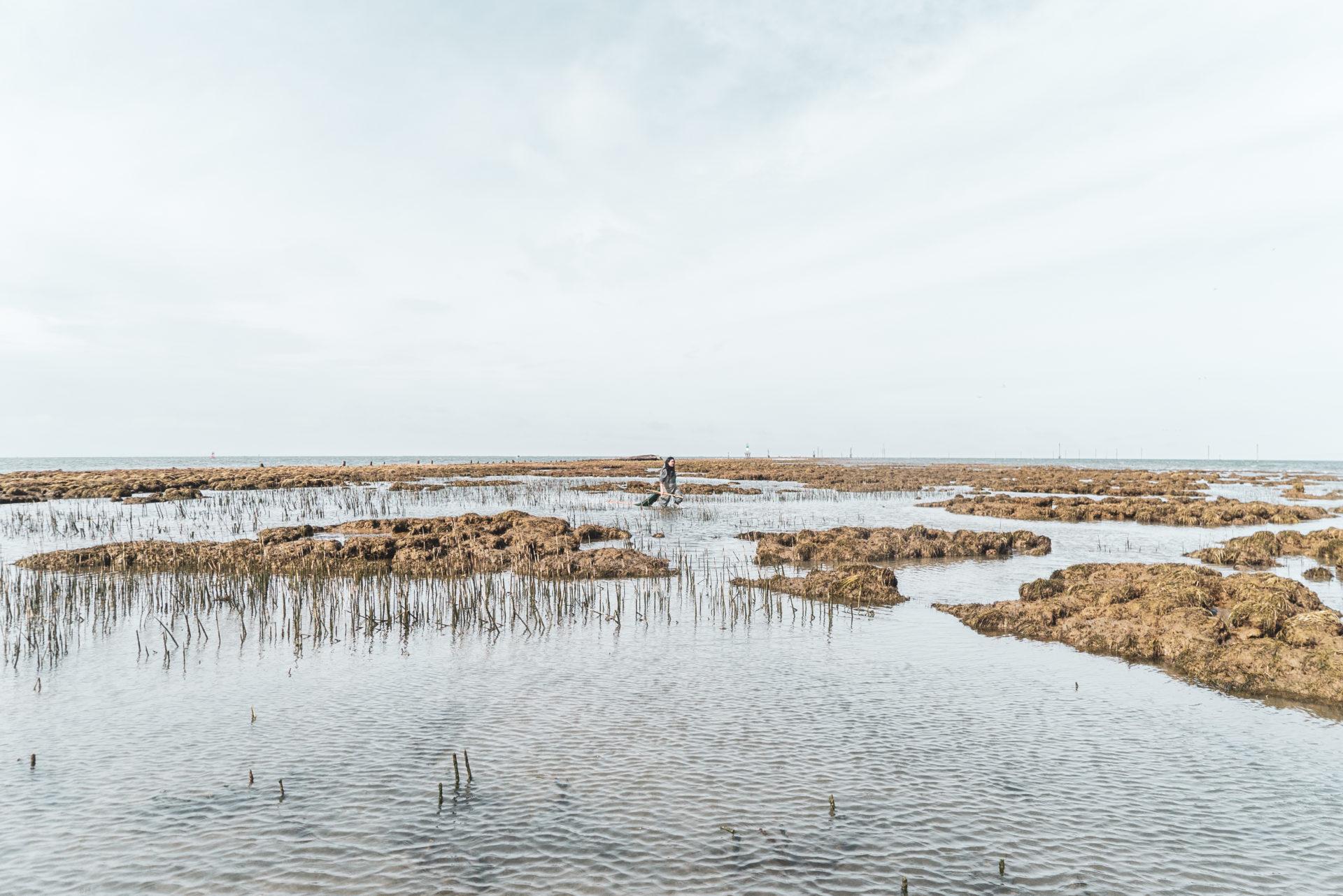 Steveston jetty