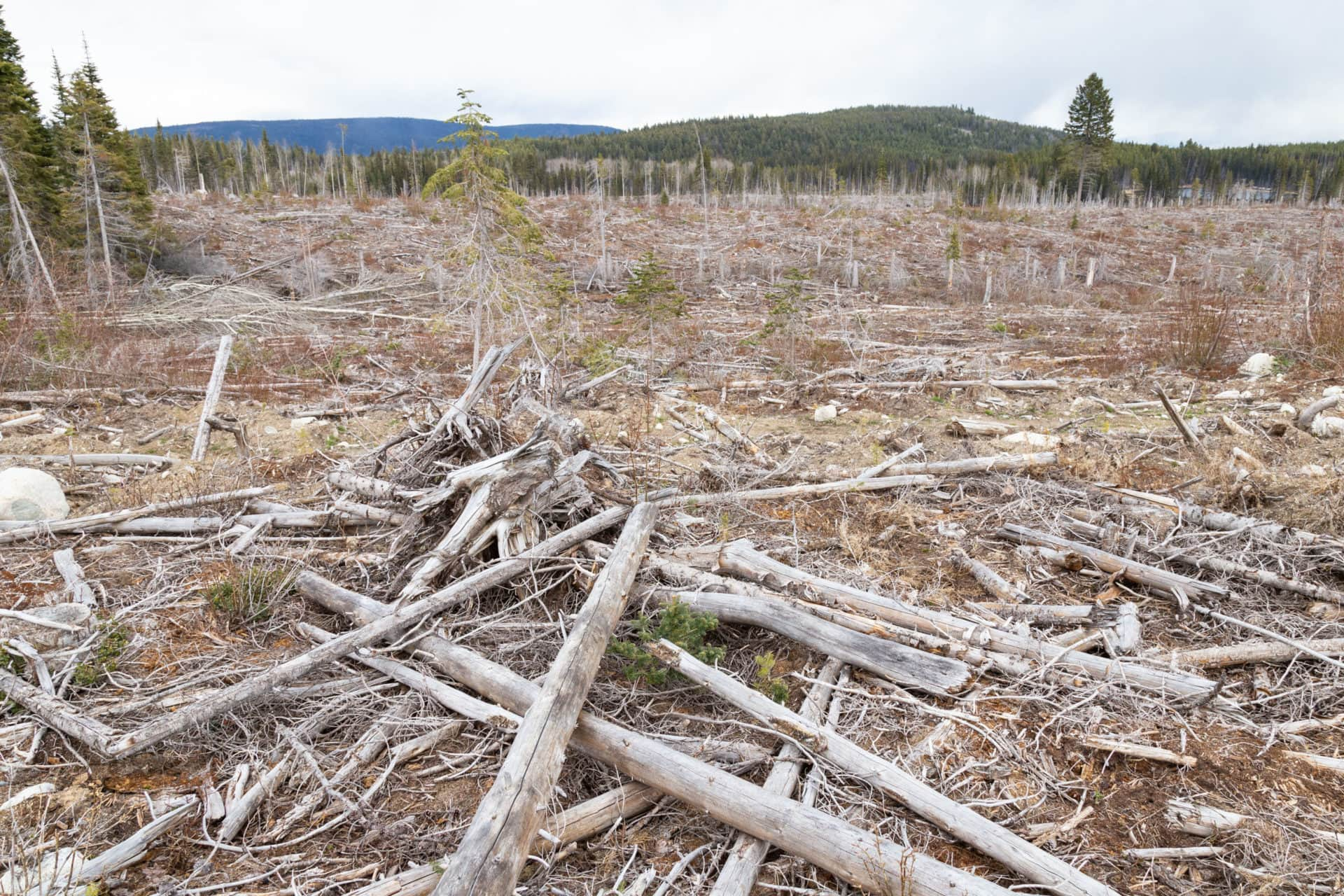 Clearcutting Peachland