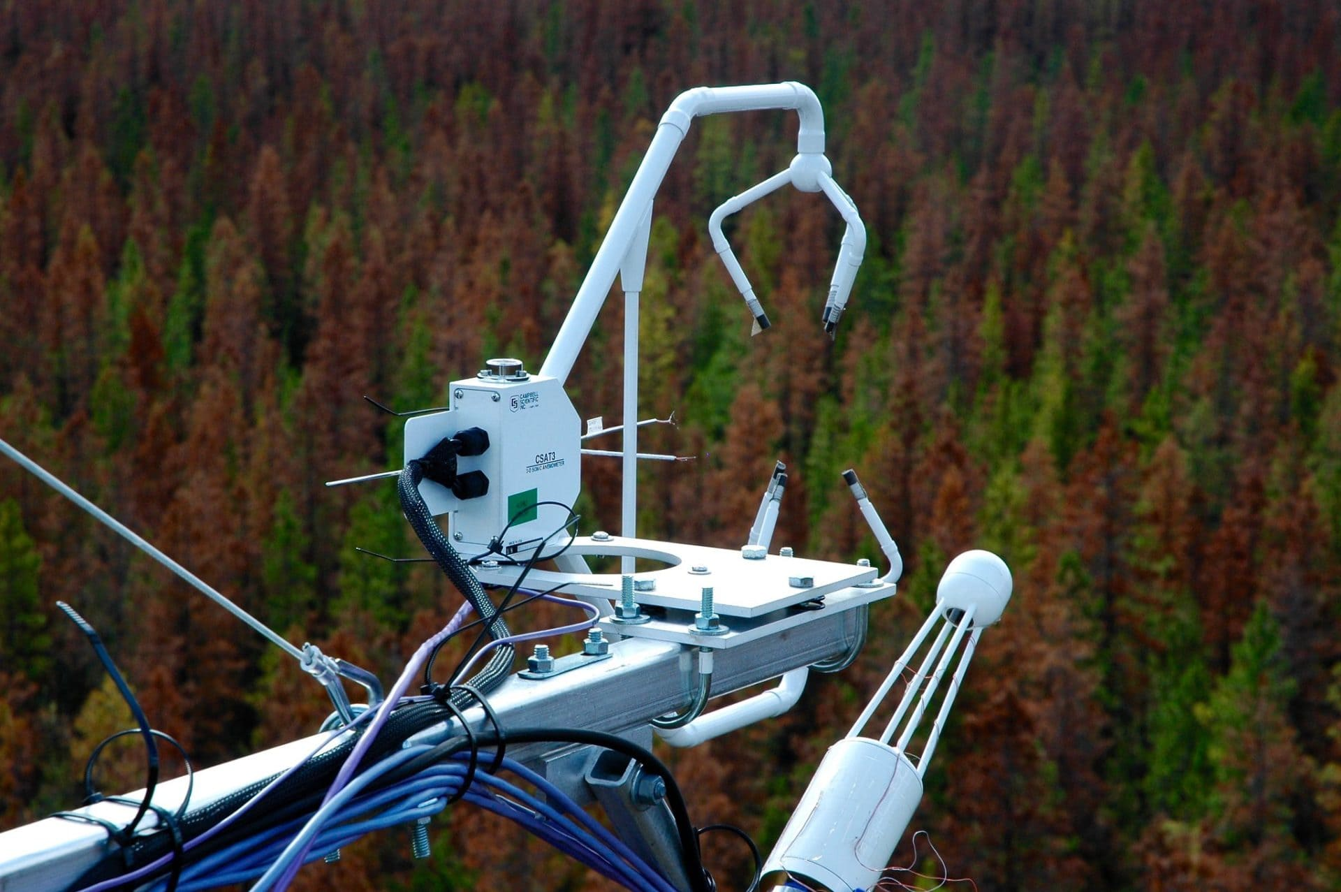Pine Beetle forest study UBC
