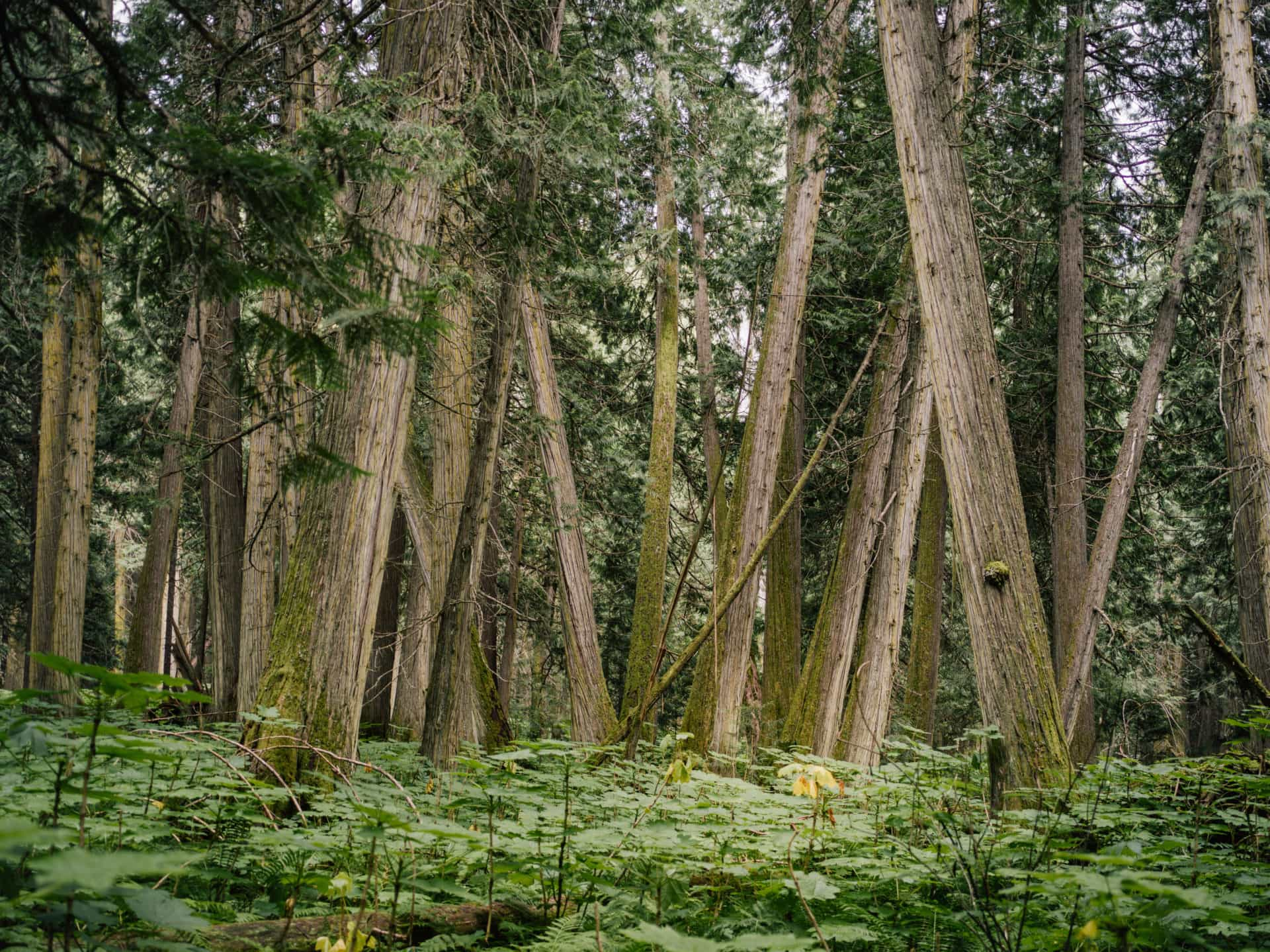 B.C.'s rare inland temperate rainforest
