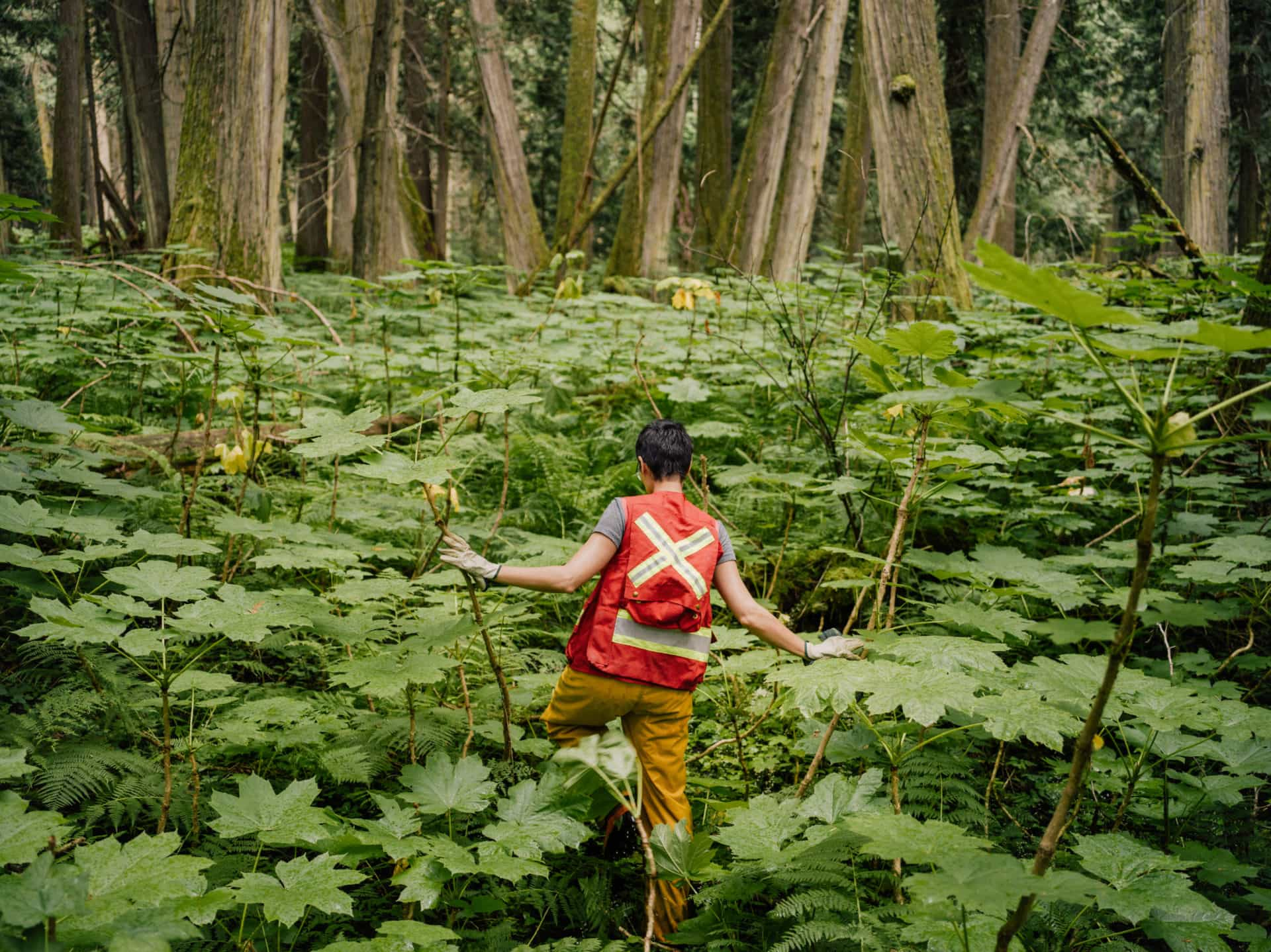 Michelle Connolly in cedar old growth forest