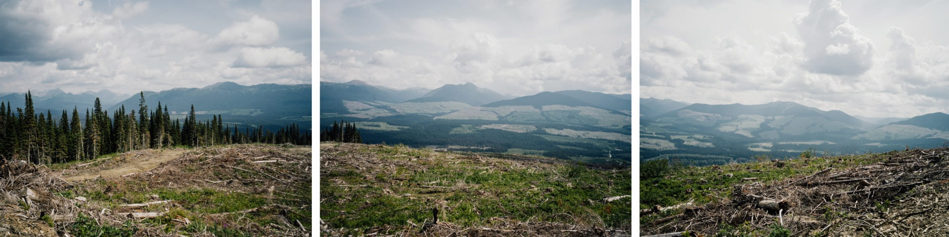 Clearcuts in the anzac river valley of British Columbia
