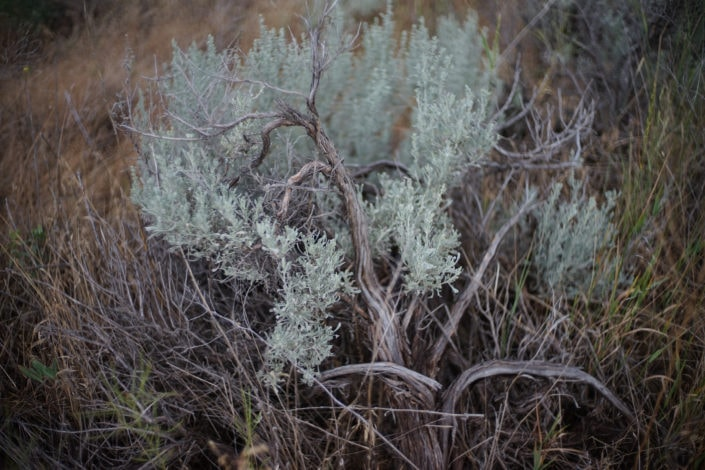 Desert brush South Okanagan-Similkameen National Park Reserve Jake Sherman