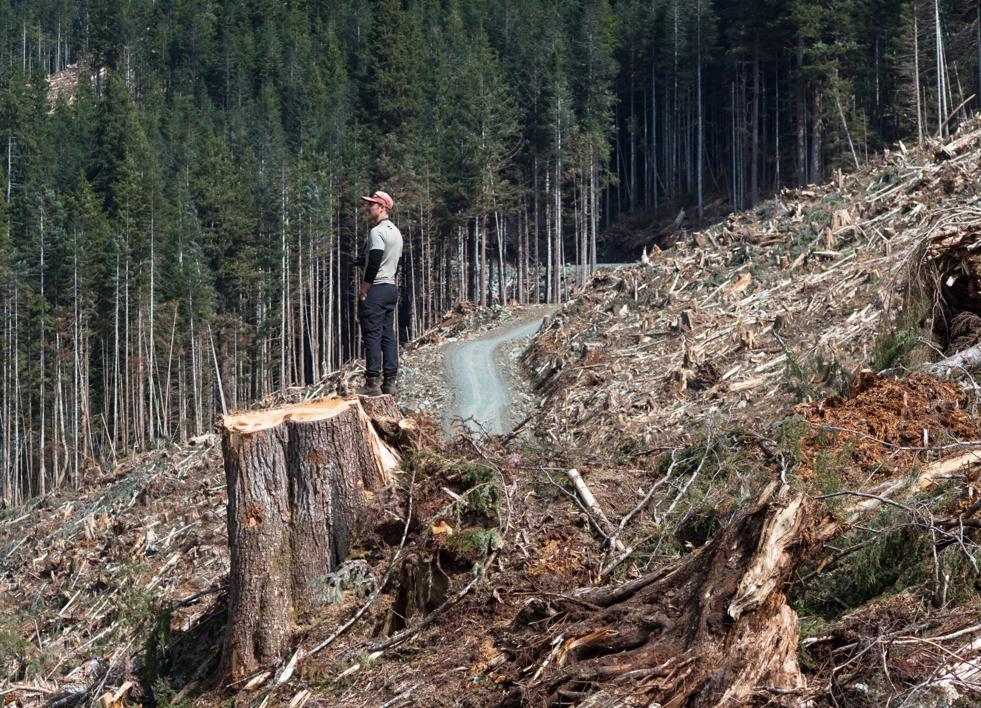 Wilderness Committee campaigner Torrance Coste in a B.C. Timber Sales old-growth clearcut