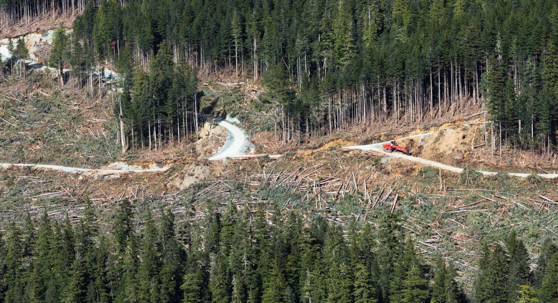 Logging in Schmidt Creek.