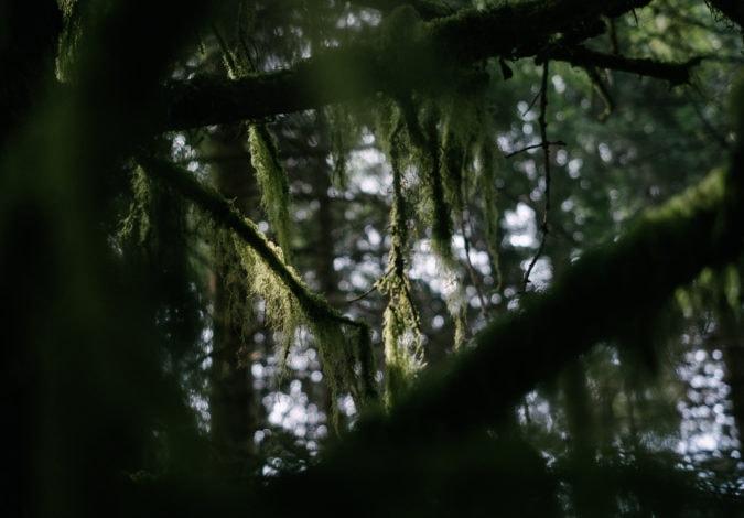Moss-draped rainforest