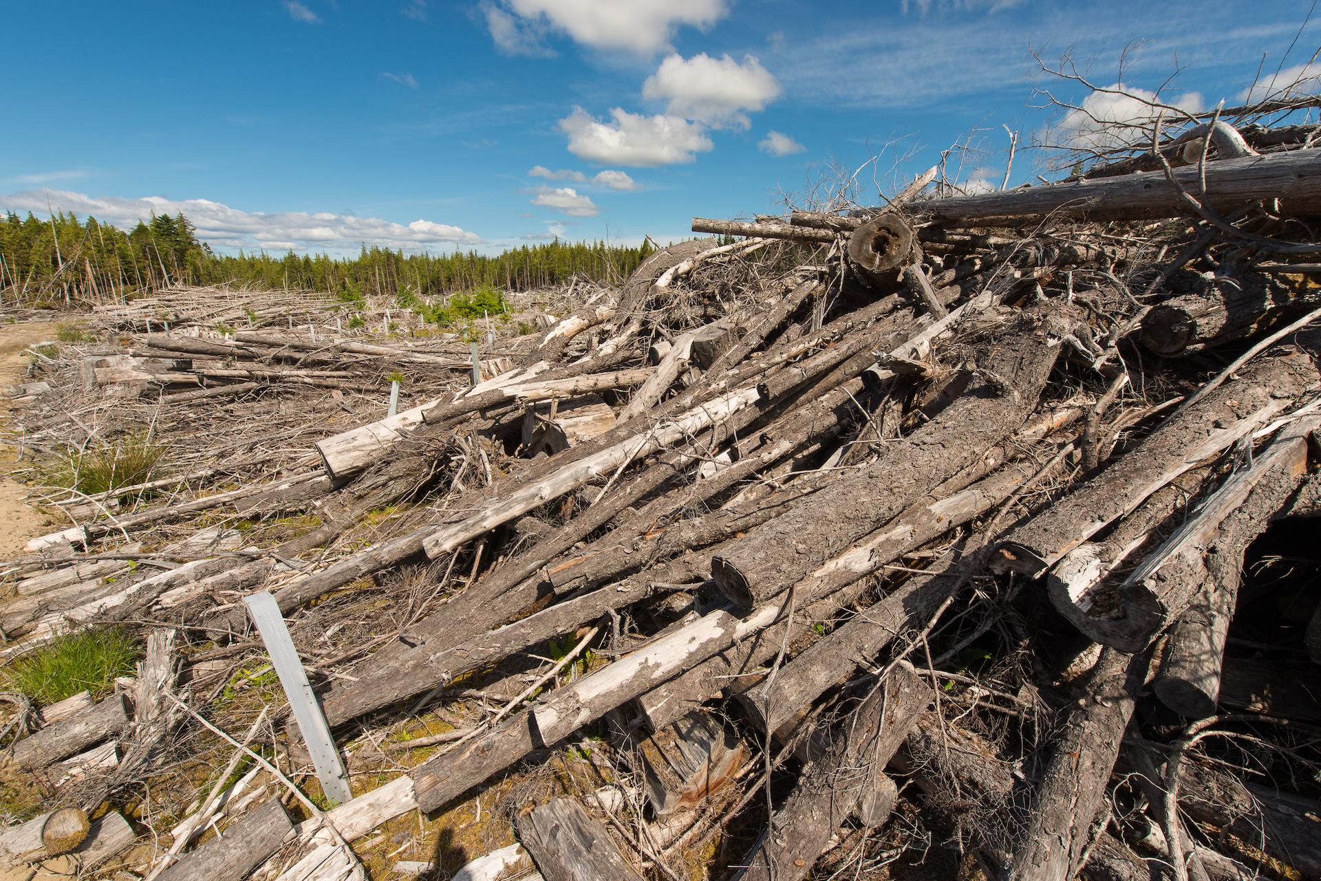 piles of timber