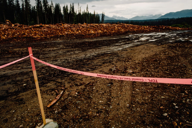 Boreal rainforest clear-cut to make way for TransCanada's $4 billion Coastal GasLink pipeline