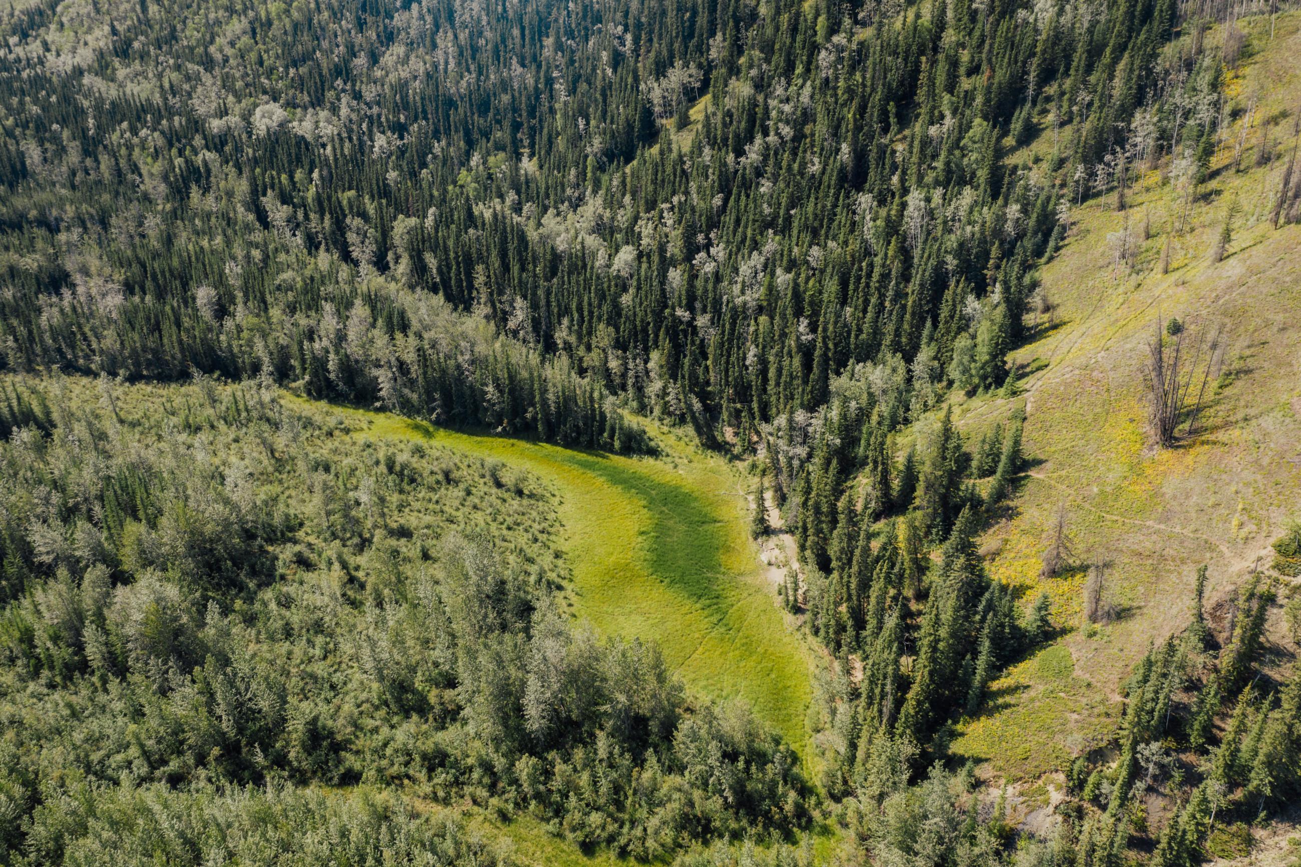 Taylor Roades mineral lick on the Kechika River Kaska Dena