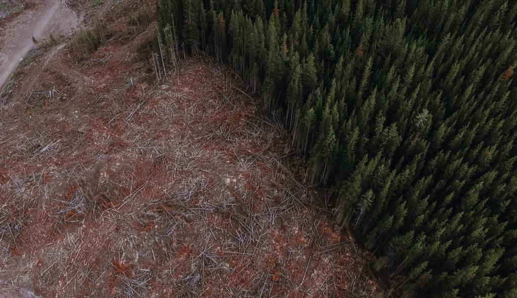 Canwel clearcut whitebark pine Fernie Bailey Repp