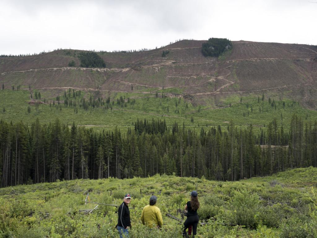 Canwel whitebark pine Elkford clearcut Bailey Repp