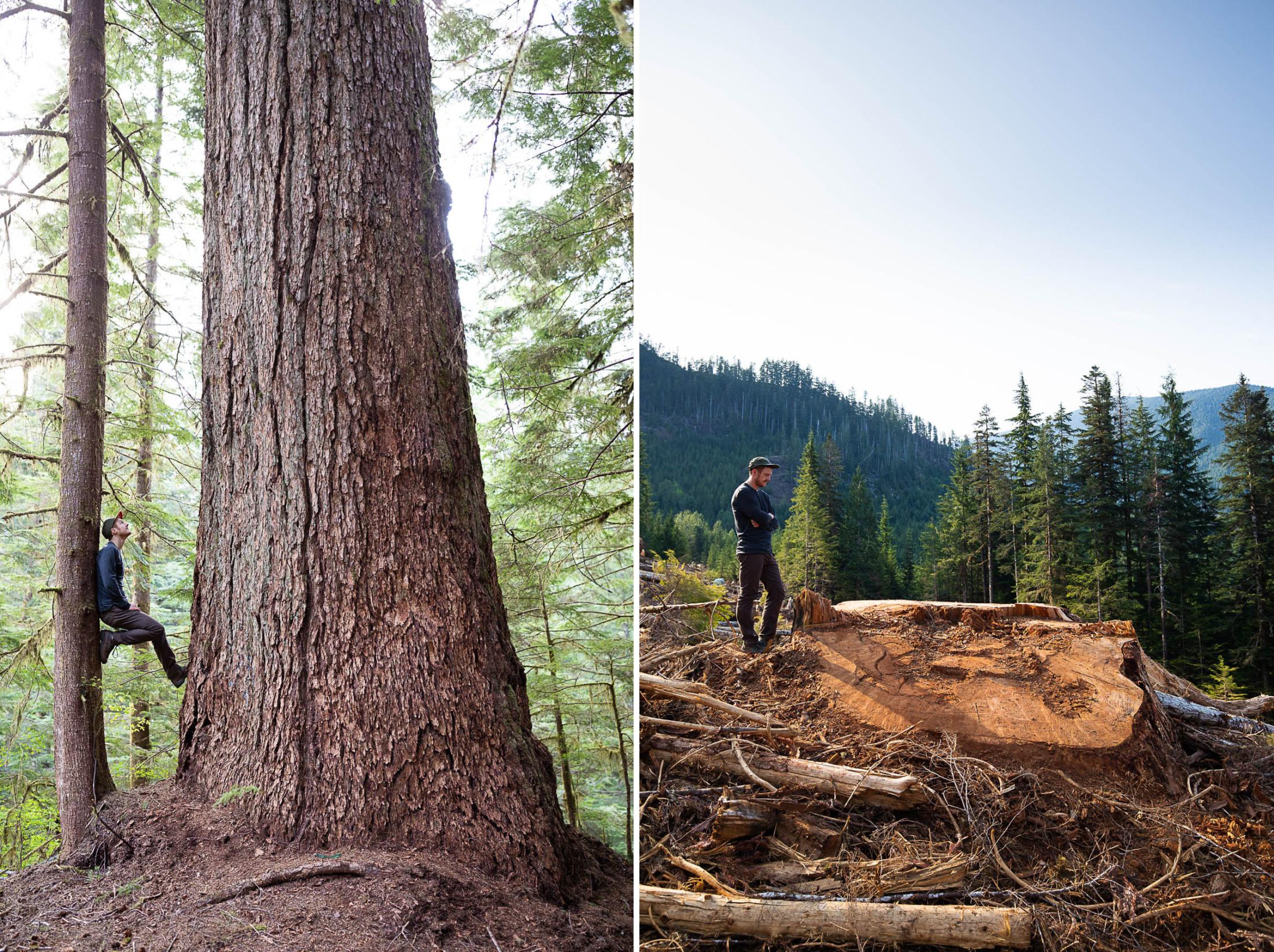 Nahmint logging douglas fir