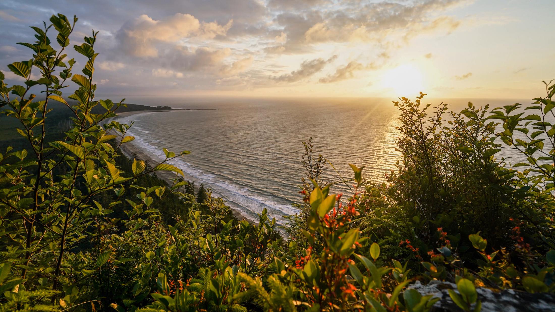 The picturesque Haida Gwaii coastline. Photo: Gregory Gould