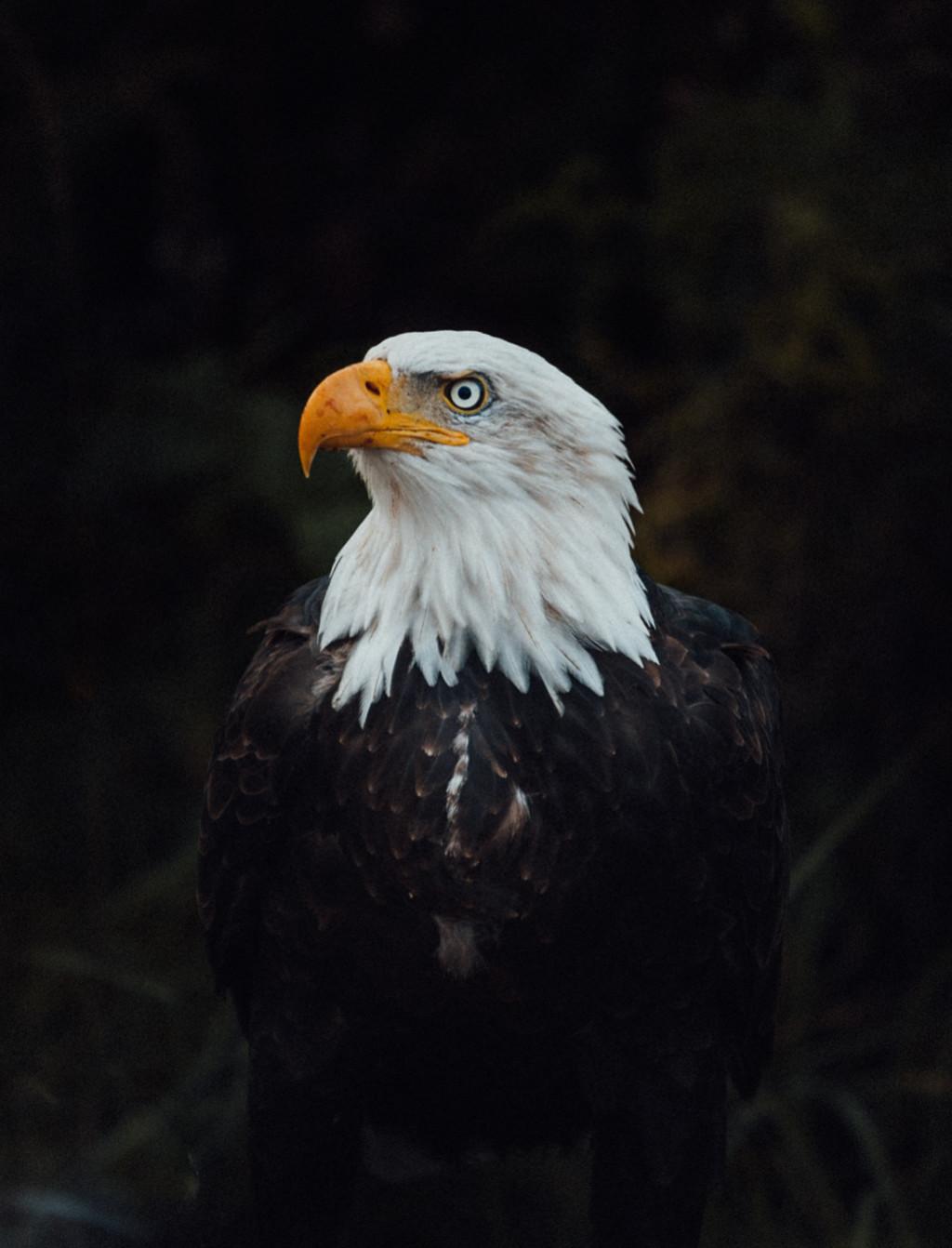 Heiltsuk Bella Bella eagle