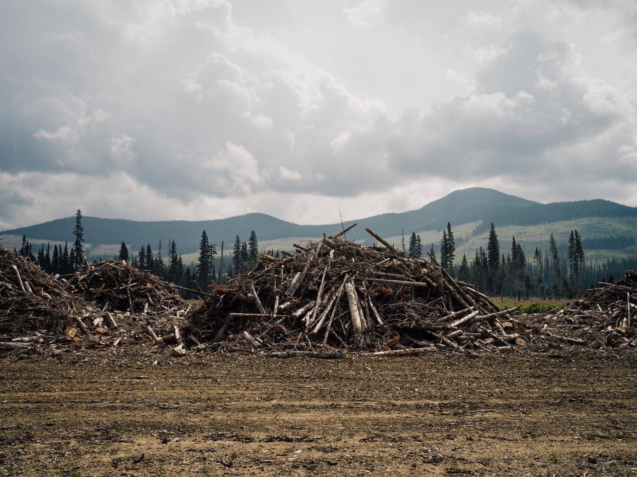 Spruce Inland Temperate Rainforst clear cut logging