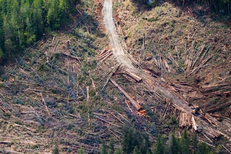Nahmint Valley ninth-largest Douglas Fir