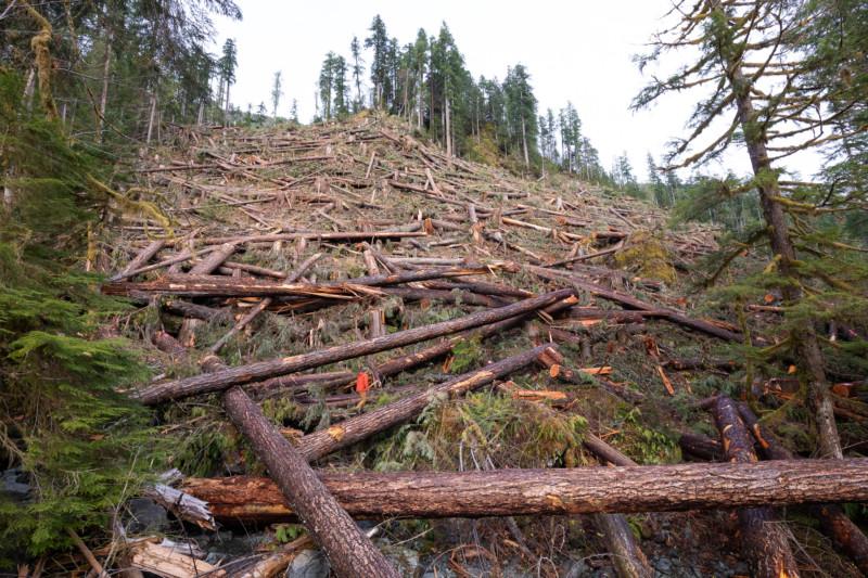 Nahmin Valley old growth clear cut