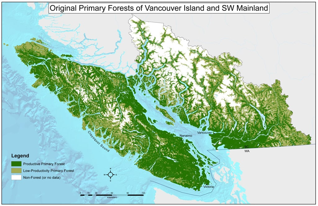 Vancouver Island old growth before