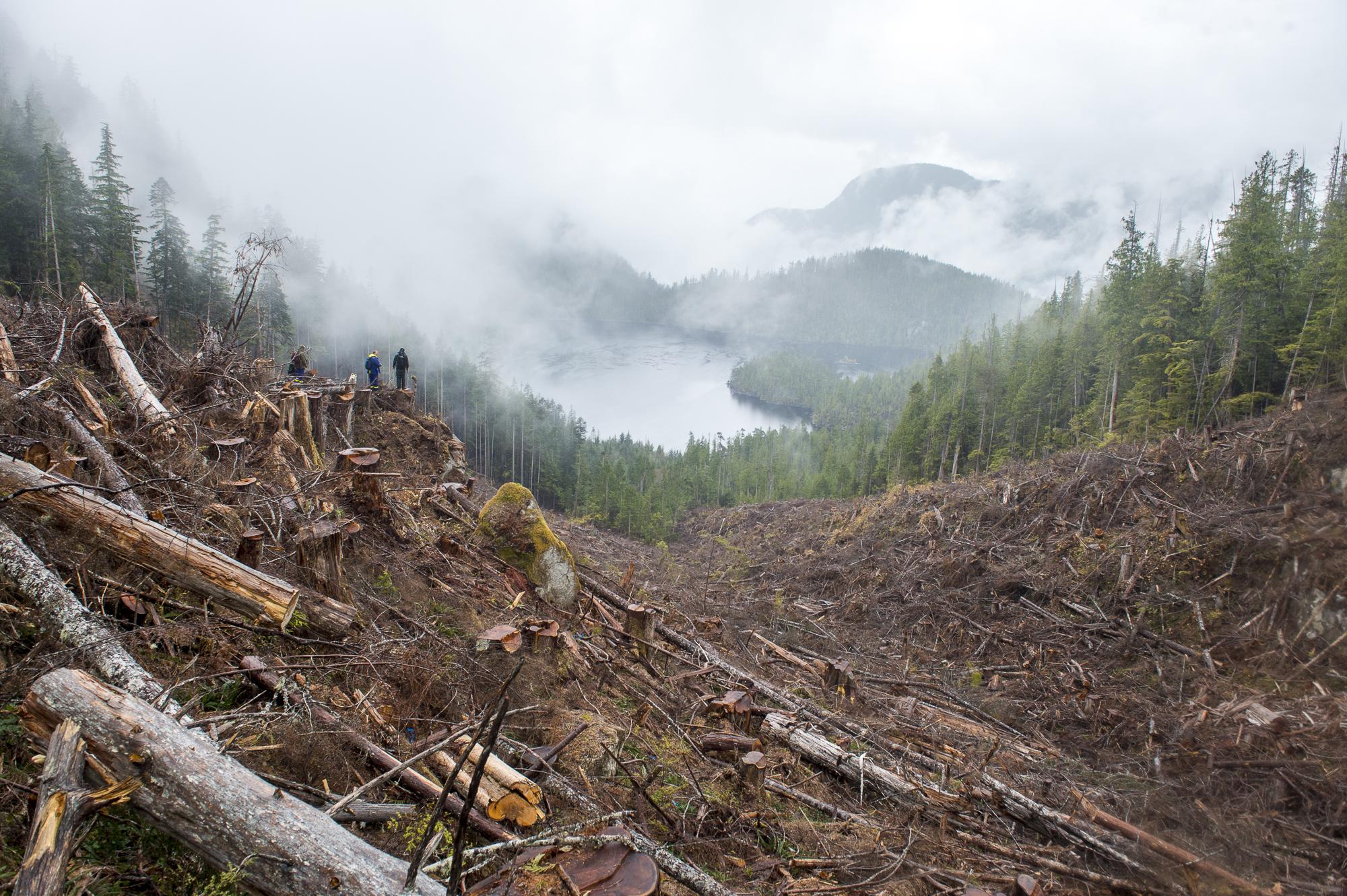 Gilford Island logging Great Bear Rainforest