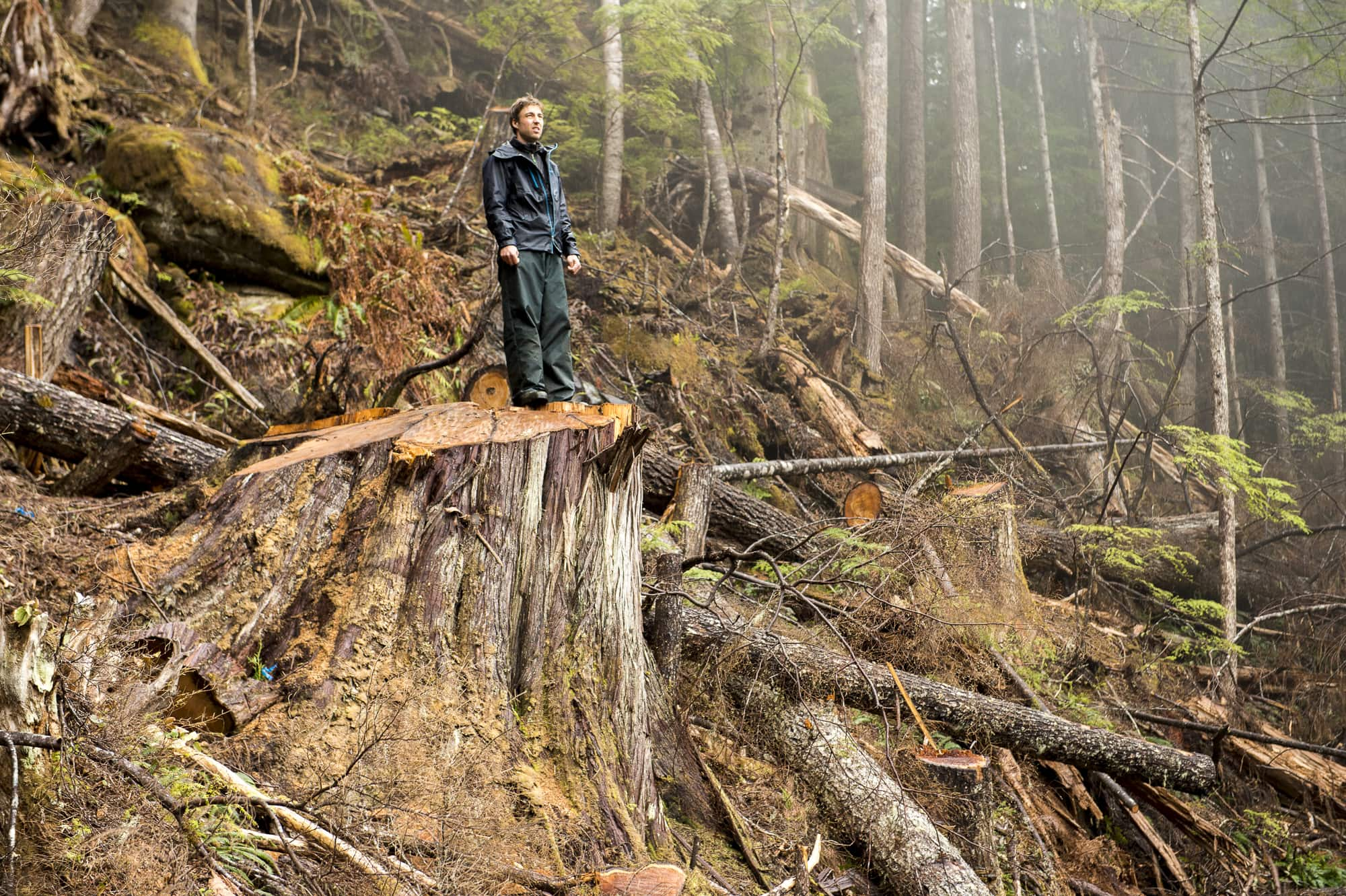B.C.'s old-growth forest nearly eliminated, new provincewide mapping reveals