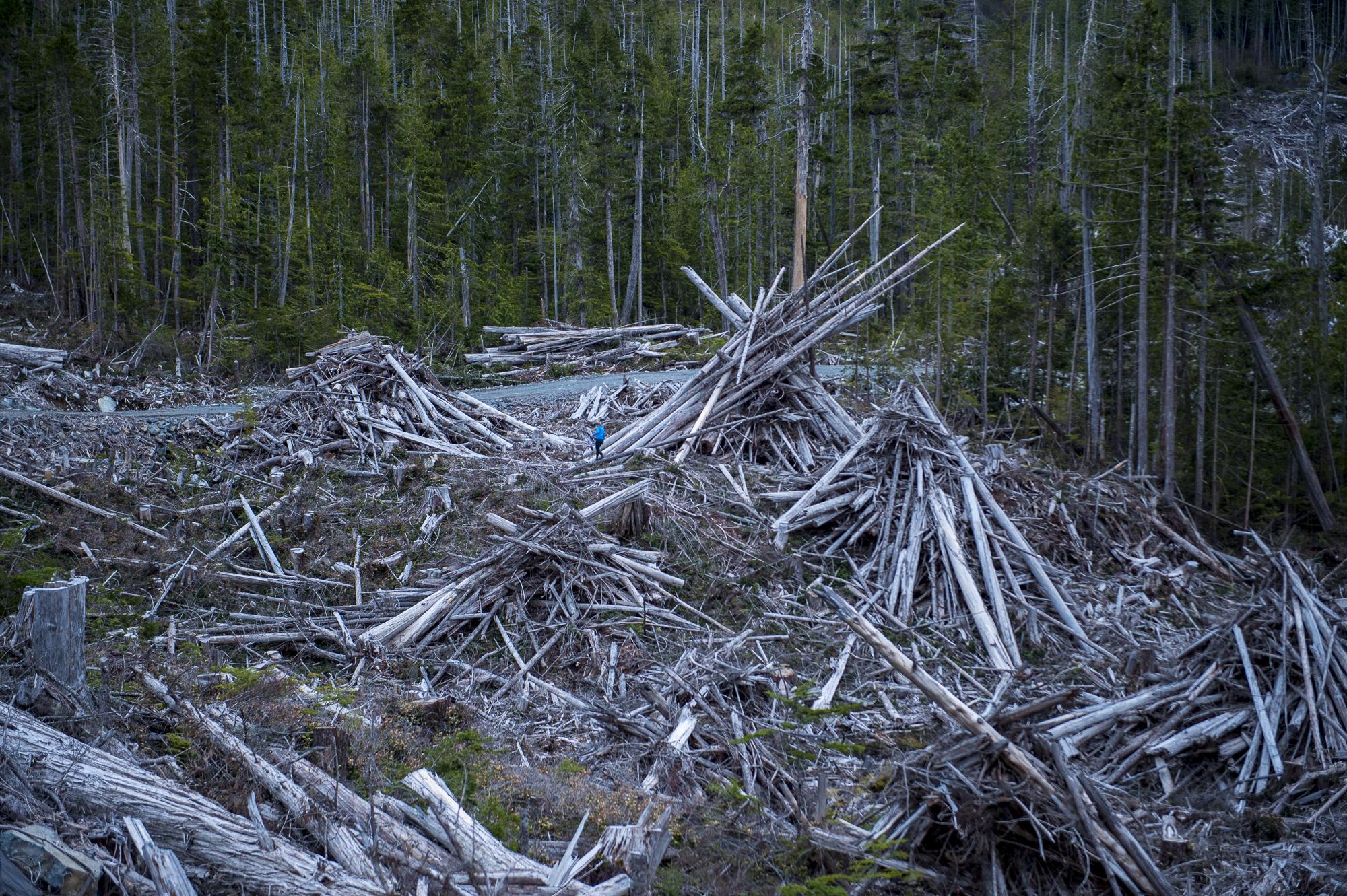 Waste piles cypress Gilford Island Logging Interfor