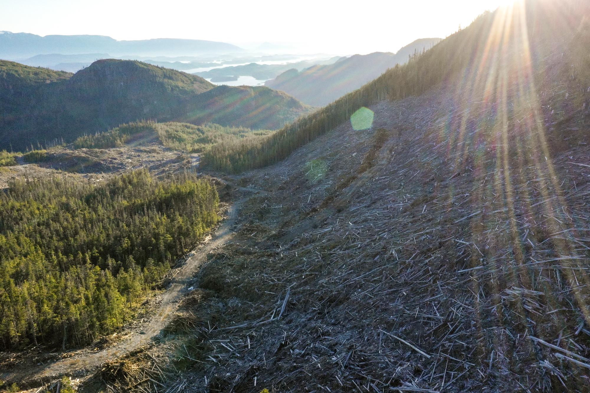 Gilford Island Great Bear Rainforest Interfor Logging