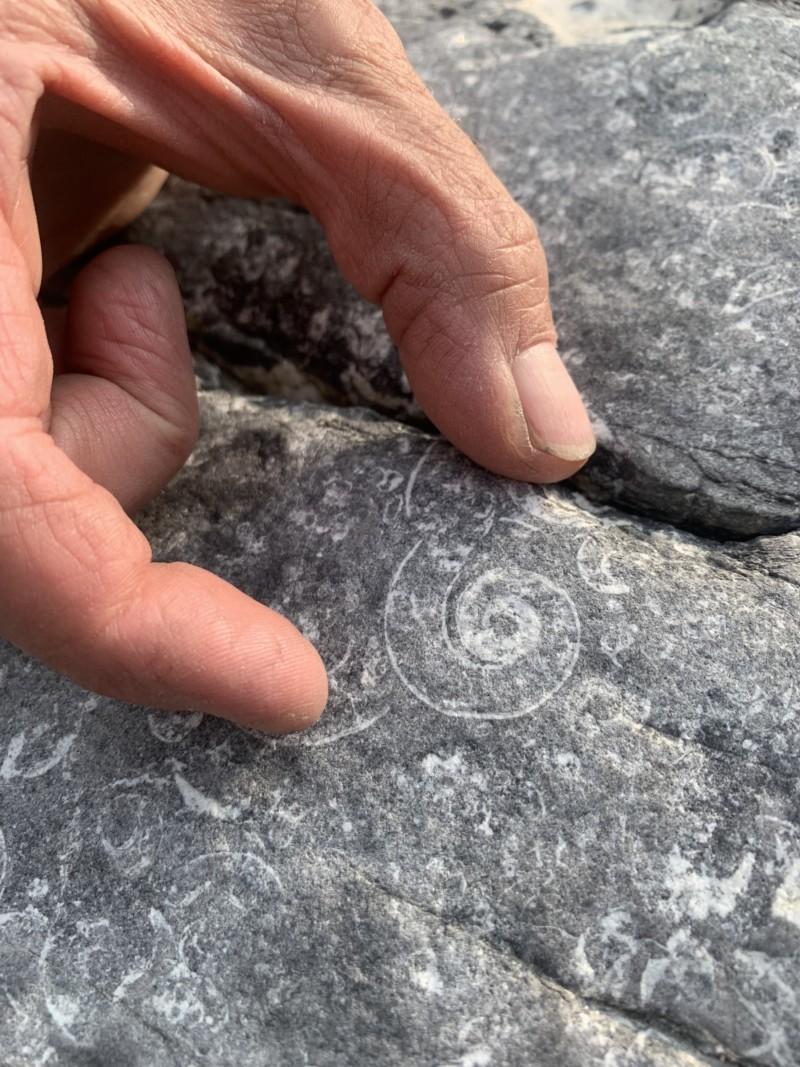 Nahanni National Park Reserve fossils