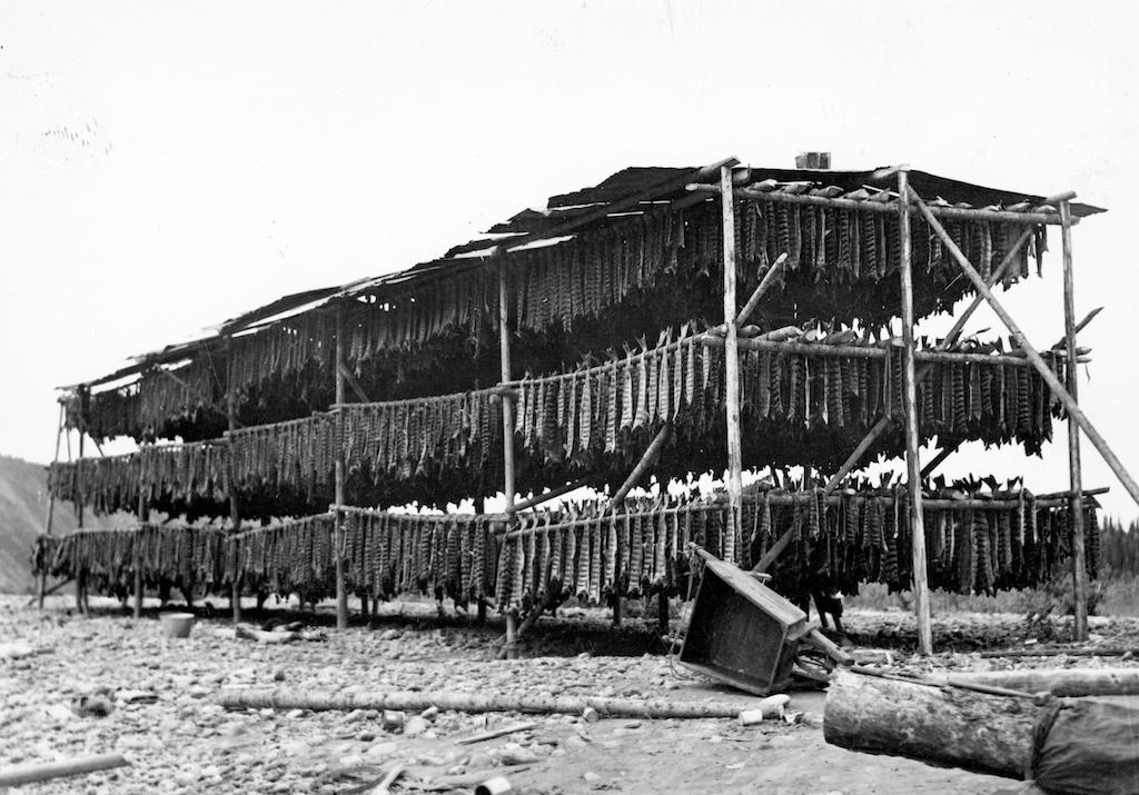Chinook salmon archival photo drying rack