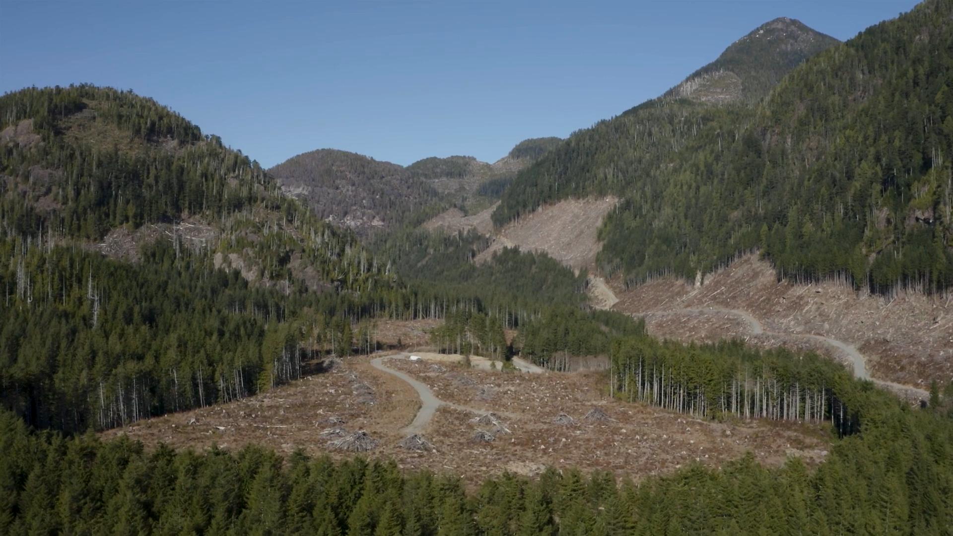 Logging Nuchatlaht traditional territory
