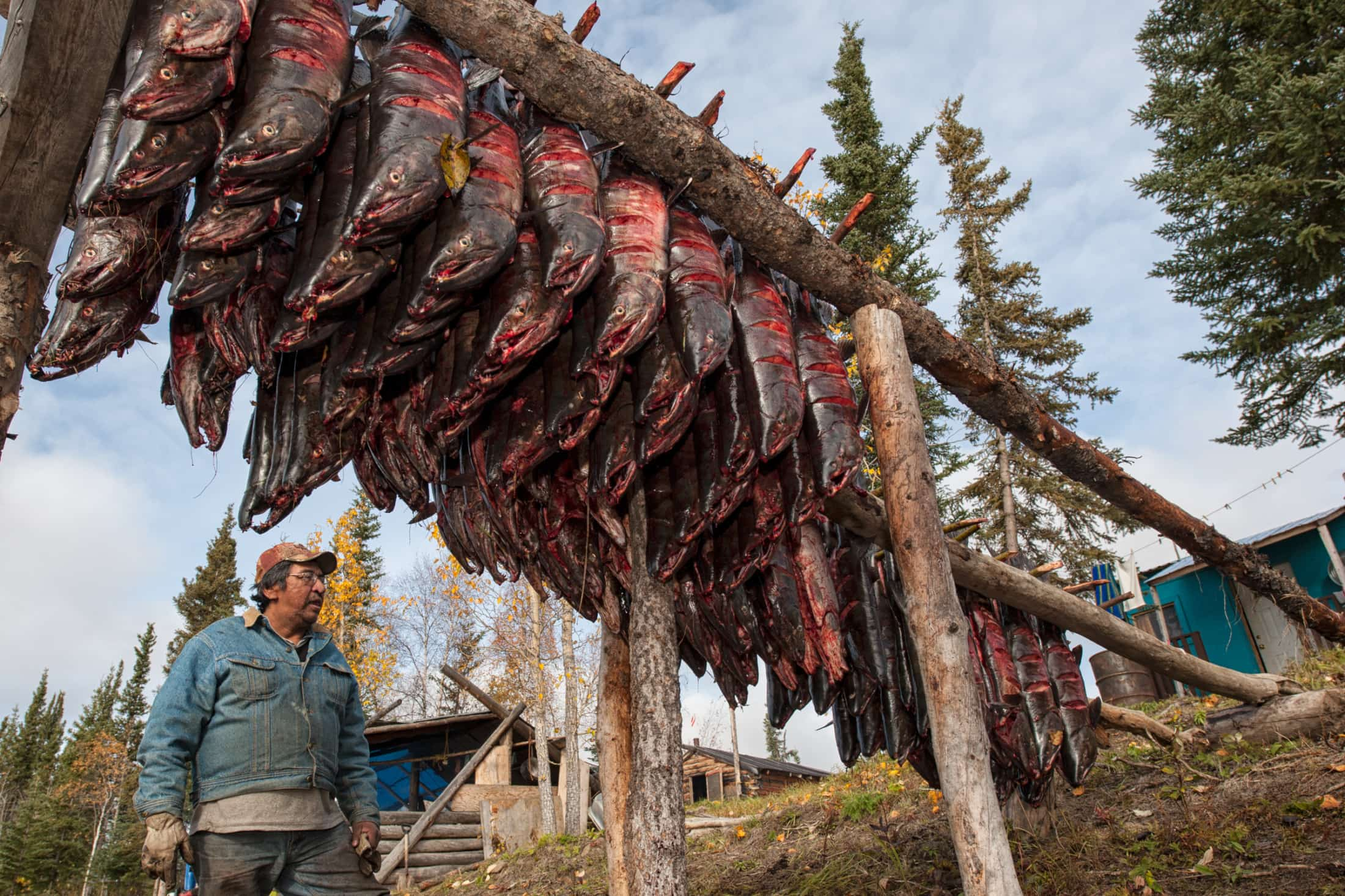Paul Josie chum salmon Porcupine River