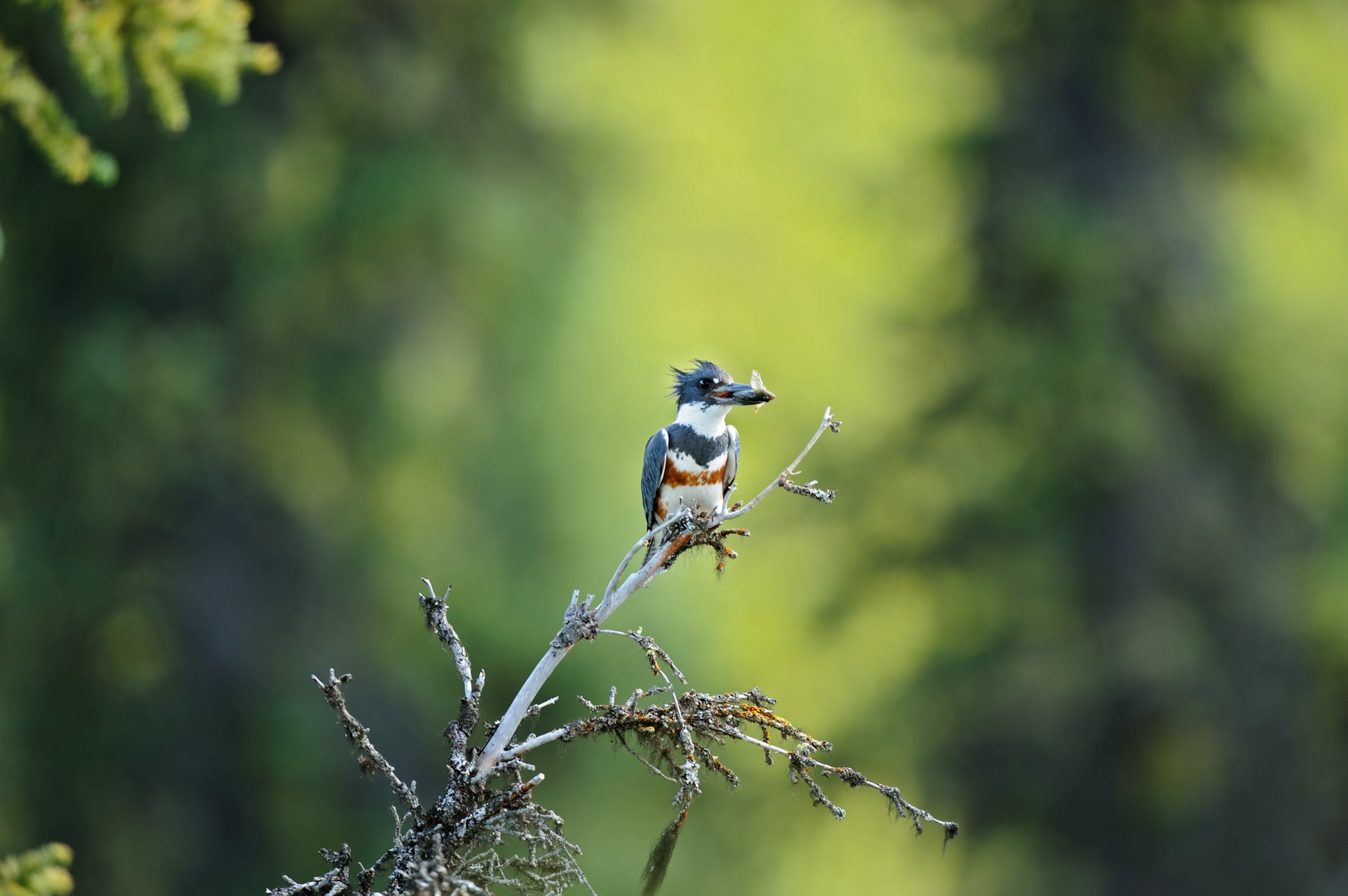 Nahanni National Park Reserve Birds