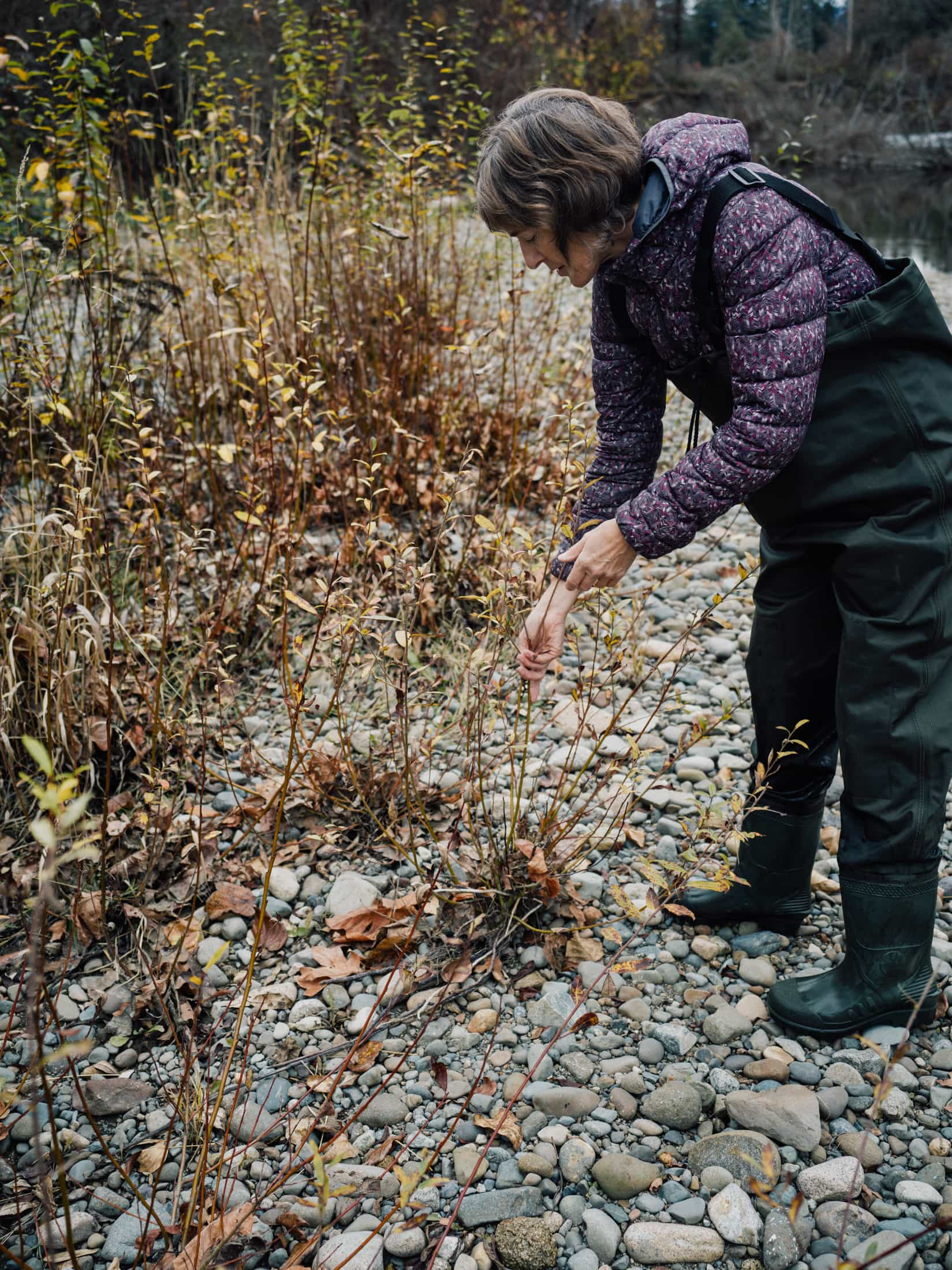 Tsolum River restoration