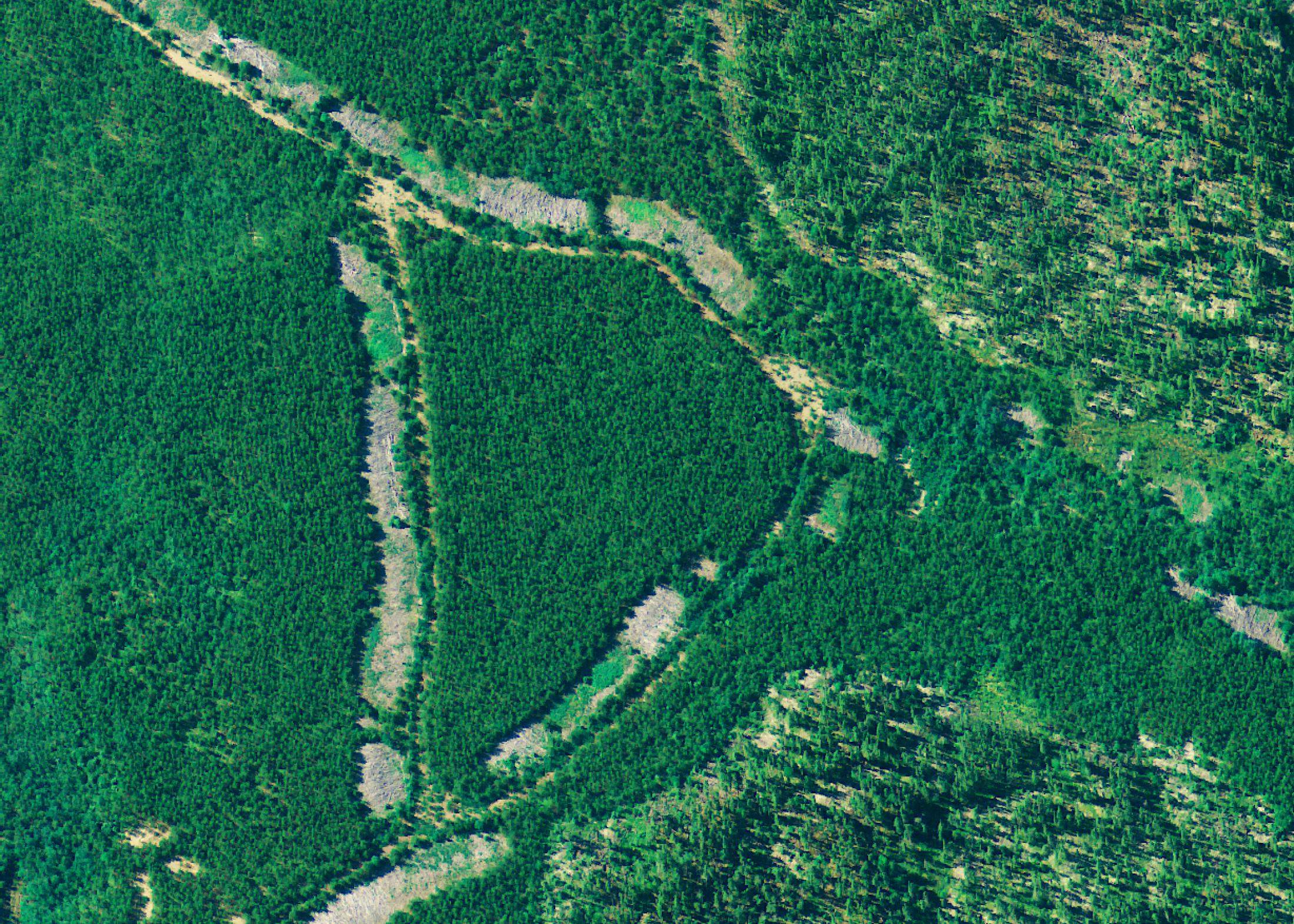 aerial-logging-scars-hesselink-image-1-e1575445871186