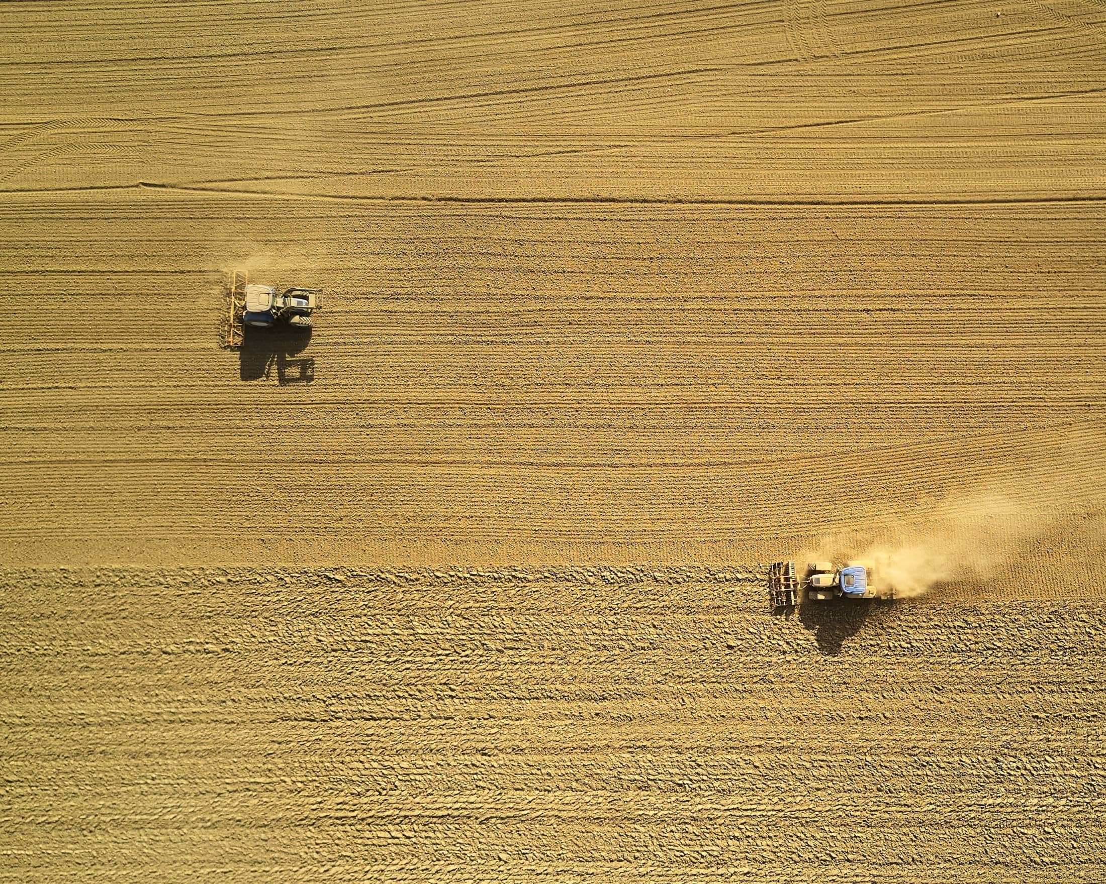 Farmers during harvest time