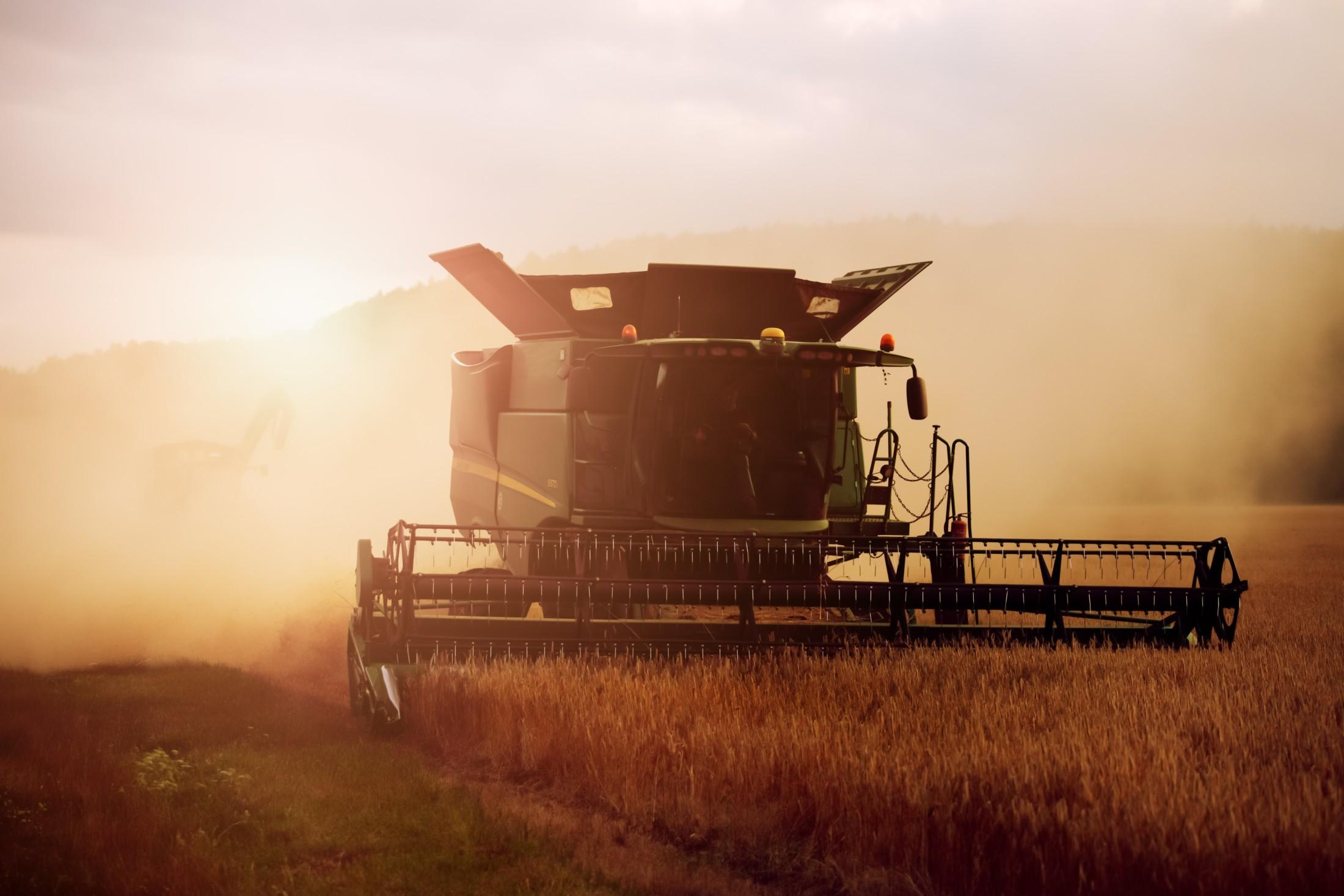 Farmer during harvest time